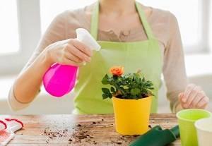 Как развести актару для полива комнатных растений