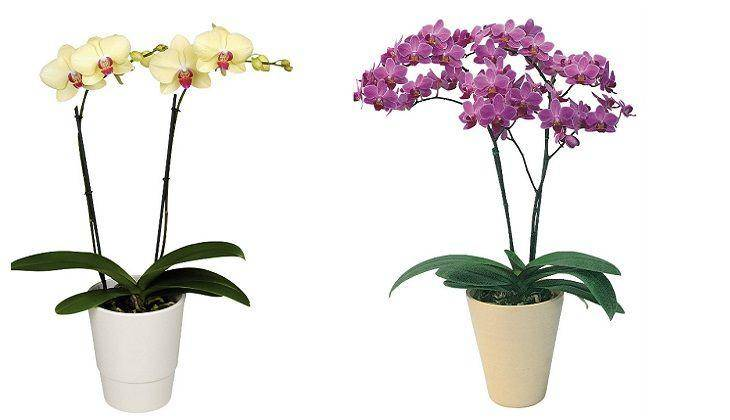 Орхидеи уход за ними в домашних условиях