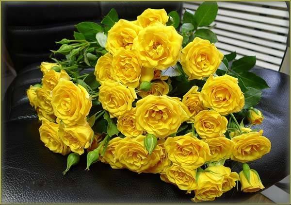 Значение цветка роза