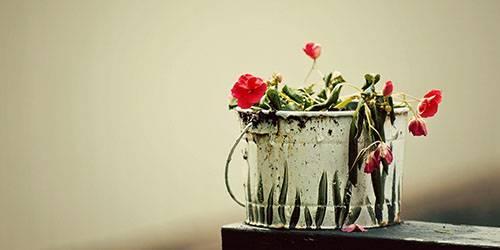 Завядший цветок