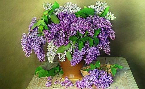 Завядшие цветы