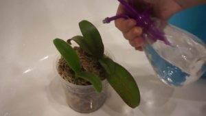 Худые маленькие жучки в орхидее