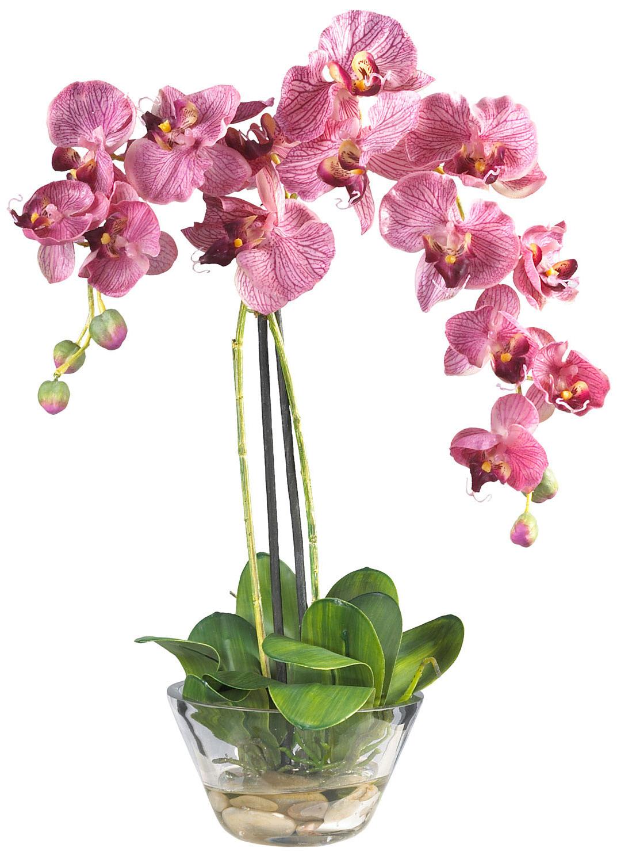 Чем удобрять орхидею для цветения