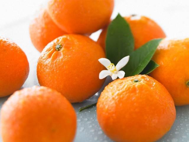 Гибрид апельсина и мандарина, название которого клементин