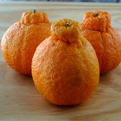 гибрид мандарина и апельсина