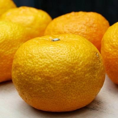 Гибрид мандарина и апельсина название