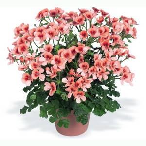 Красивые цветы в горшках
