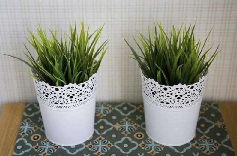 Белый налет на грунте комнатных растений