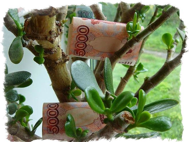 Как садить денежное дерево для привлечения денег