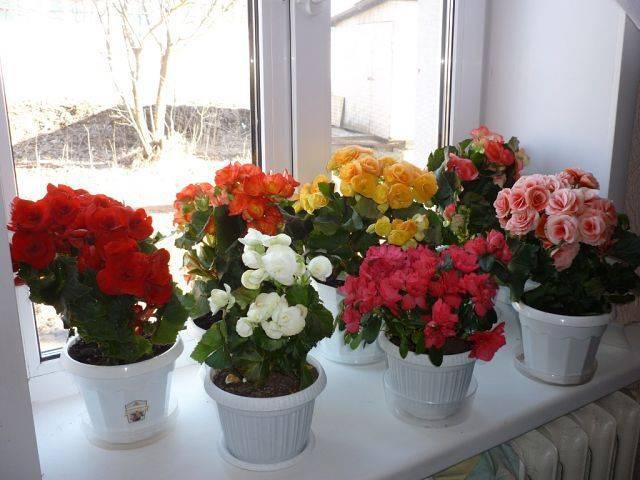 Высокие домашние цветы