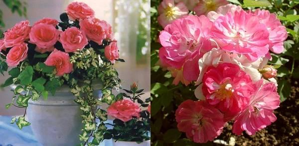 Цветы нежно розовые
