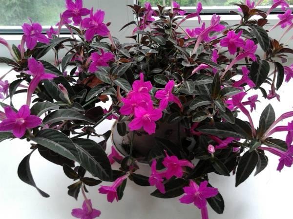 Домашние цветы неприхотливые в уходе