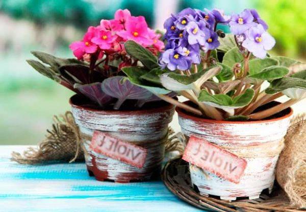 Почва для фиалок в домашних условиях