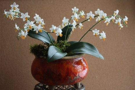 Мини орхидеи уход в домашних условиях