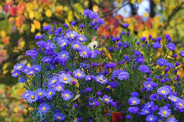 Редкие растения для сада