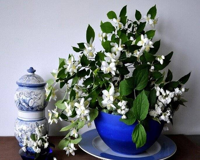 Цветущие цветы для дома