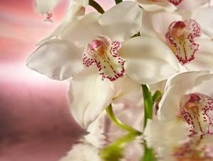 Орхидея реанимация в домашних условиях