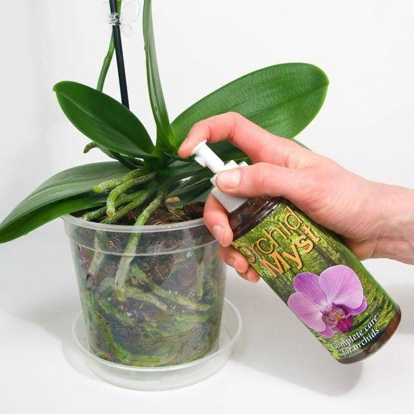 Как заставить цвести