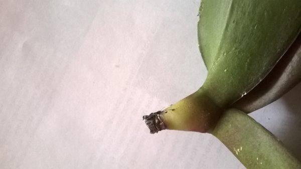 Корневин для орхидей