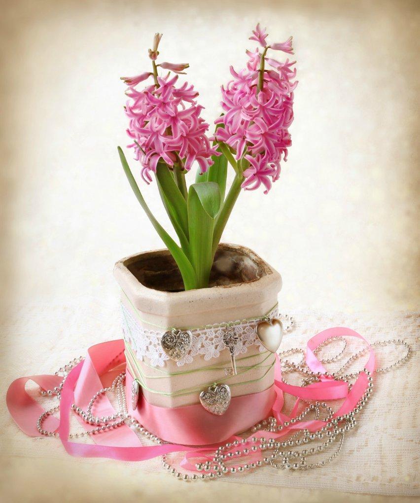 Подарок девушке цветок в горшке