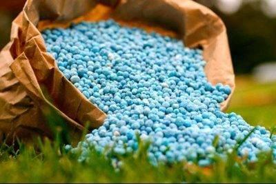 Почему не цветет адениум в домашних условиях