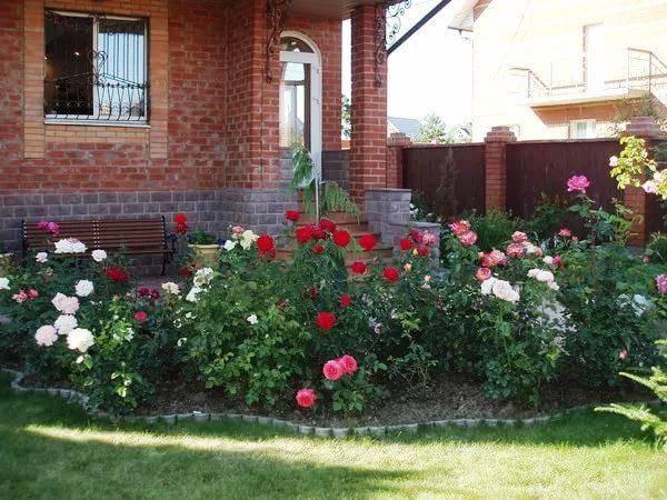 Розы на участке дизайн