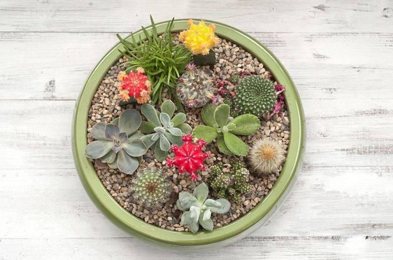 Декоративные садовые цветы