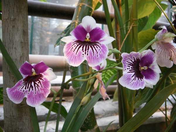 Как садить орхидею