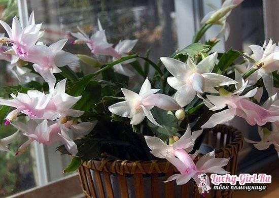 Комнатные цветы которые цветут круглый год