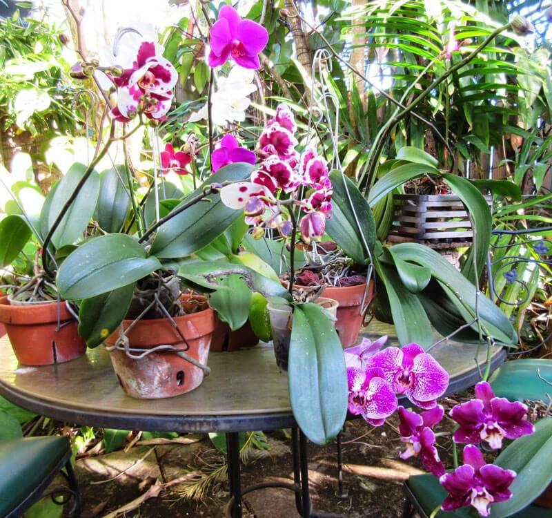 Как растет орхидея
