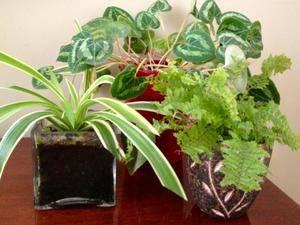 Эпин инструкция по применению для комнатных растений