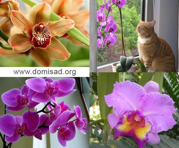 Орхидея уход в домашних условиях