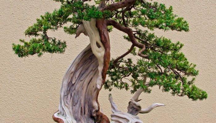 Маленькие деревья