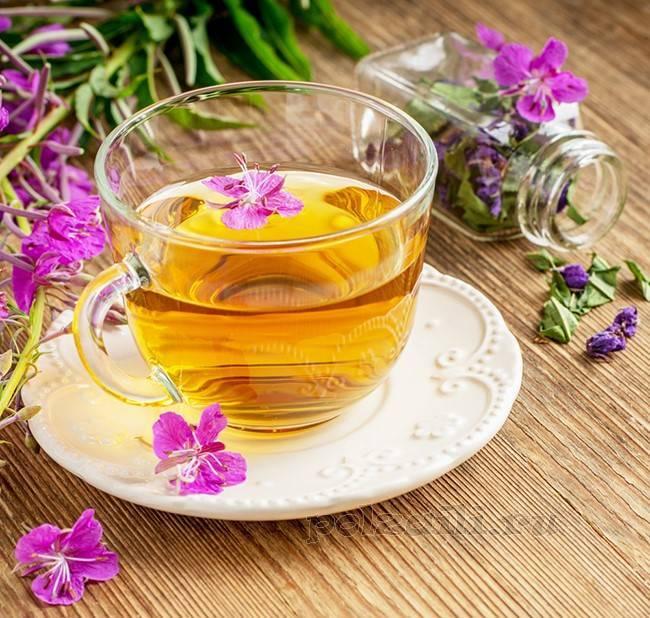 Целебные свойства иван чая и правила применения