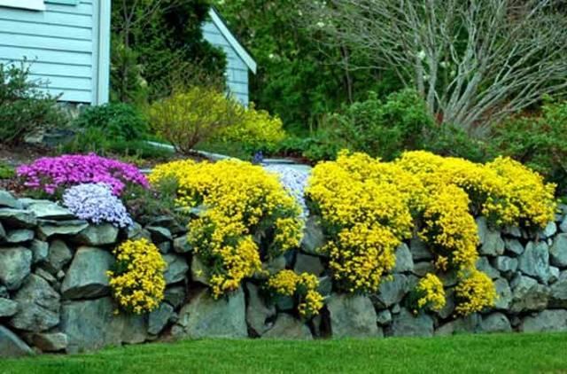 Маленькие желтые цветы