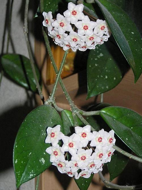 Цветок с длинными тонкими листьями
