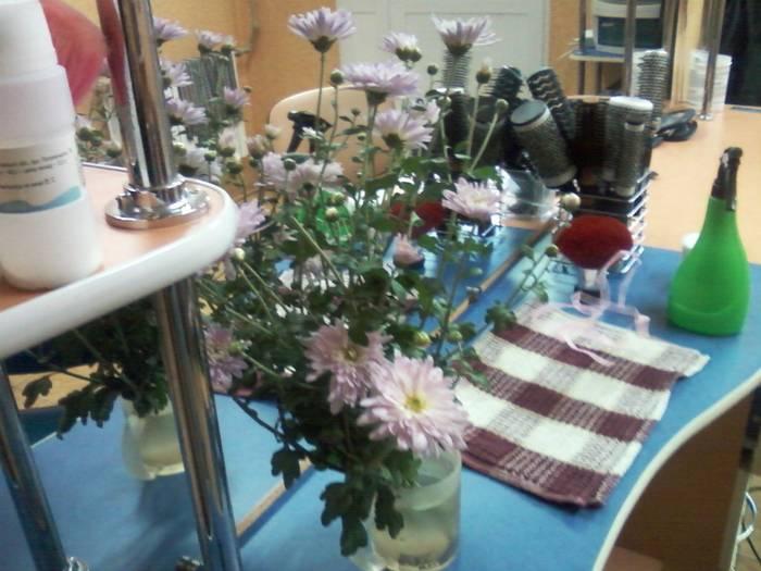 Цветы похожие на хризантемы