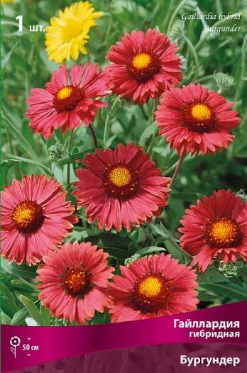 Gaillardia Seeds Burgundy