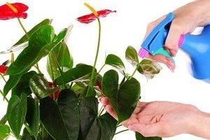 Как выглядит цветок женское счастье