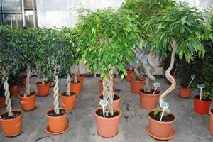 Растения с декоративными листьями