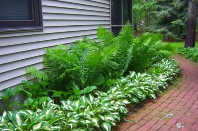 Какие растения на даче растут в тени