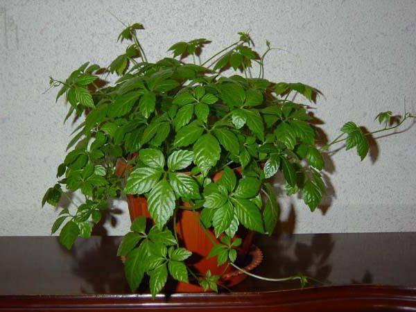 Домашние растения для темных помещений