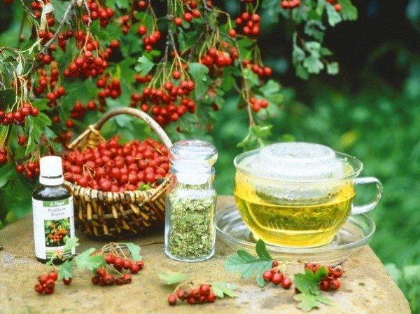 Цветы боярышника лечебные свойства и противопоказания