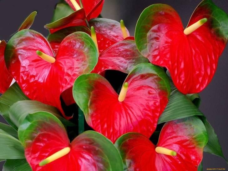 Как называется цветок любви