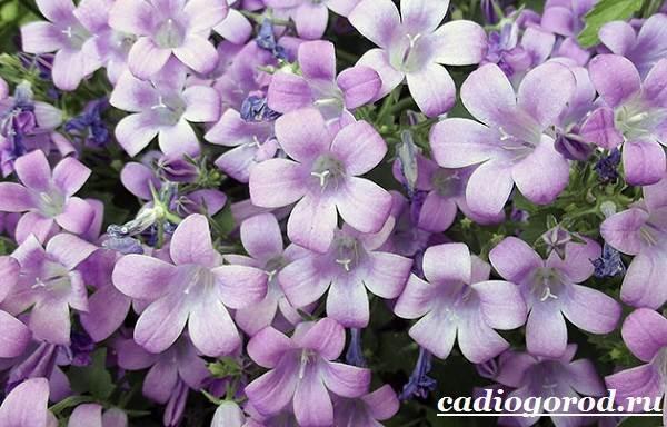 Цветы в виде колокольчиков
