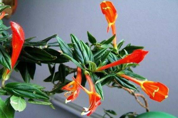 Домашние цветы в горшках цветущие