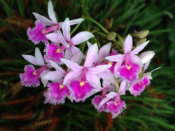 Орхидея виды и названия
