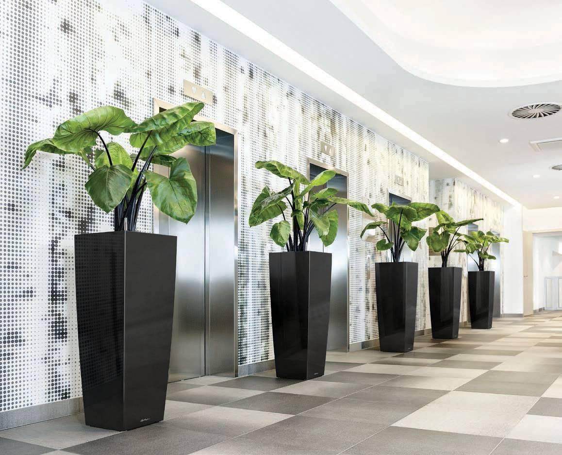 Купить офисные растения великие луки, букет