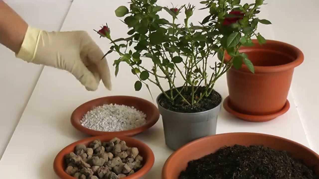 Когда можно пересаживать комнатные растения