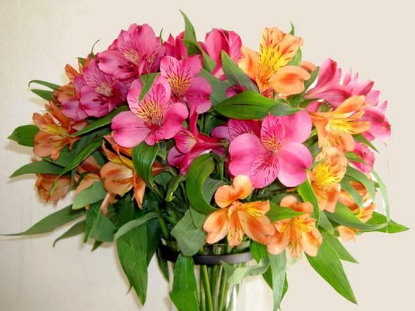 Астельмерия цветы